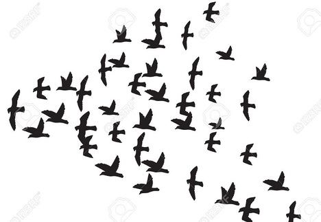 De repente, pájaros