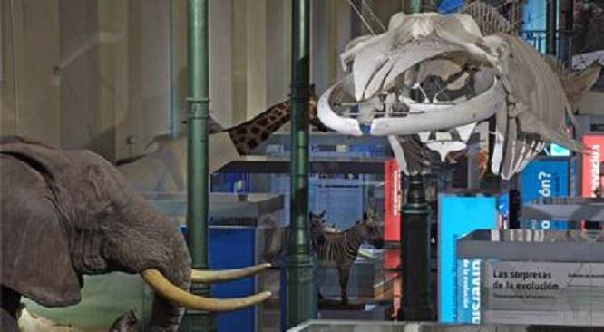 Interior del Museo de Ciencias Naturales de Madrid