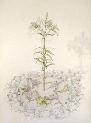 Herbarios imaginados