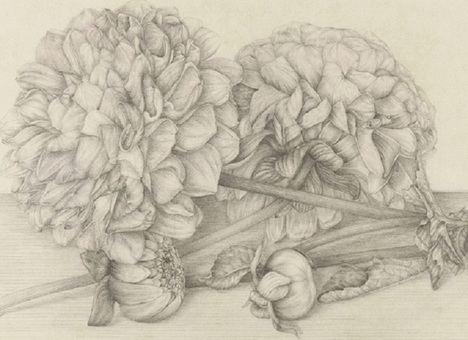 'Herbarios imaginados', una exposición entre el arte y la ciencia