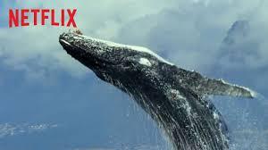 Grupo Planeta y Netflix cierran un acuerdo global de publicación